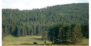 Поздравителен адрес от министъра на земеделието и храните Десислава Танева по случай Седмицата на гората